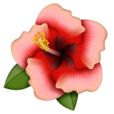 Hibiscus Emoji on WhatsApp